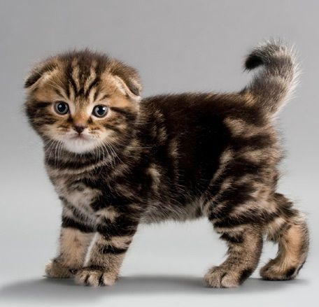 Bengal Cat Breed Facts The Joys and Hazards of Living